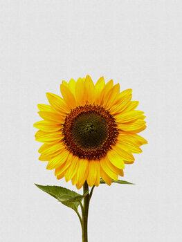 Leinwand Poster Sunflower Still Life