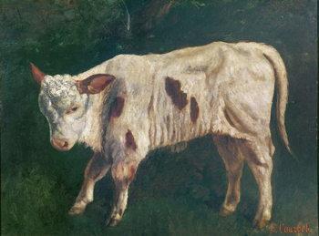 Leinwand Poster A Calf