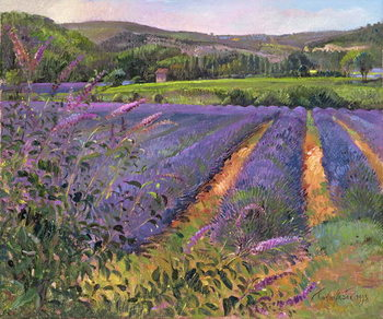 Leinwand Poster  Buddleia and Lavender Field, Montclus, 1993