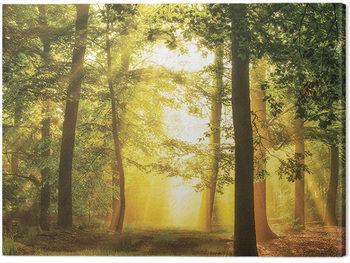 Leinwand Poster Lars Van De Goor - Hidden In Plain SIght
