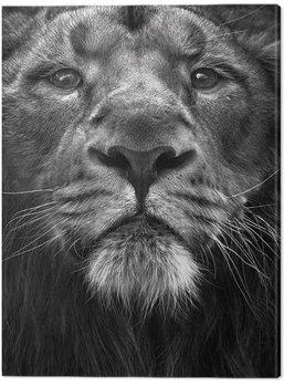 Leinwand Poster Marina Cano - The King