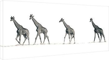 Leinwand Poster Mario Moreno - The Giraffes