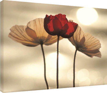 Leinwand Poster Yoshizo Kawasaki - Icelandic Poppies
