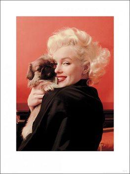 Marilyn Monroe - Love Festmény reprodukció