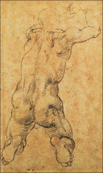Michelangelo - Nudo Virile Inginocchiato Festmény reprodukció
