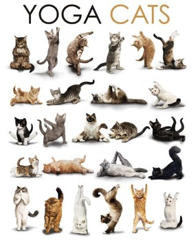 YOGA CATS - compilation Mini plakat