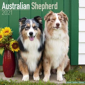 Australian Shepherd naptár 2021