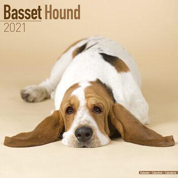 Basset Hound naptár 2021