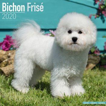 Bichon Frise naptár 2020