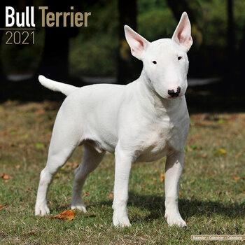 Bull Terrier naptár 2021