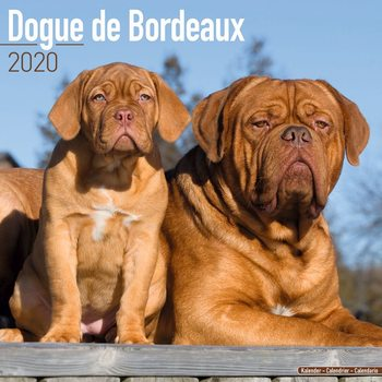 Dogue de Bordeaux naptár 2020
