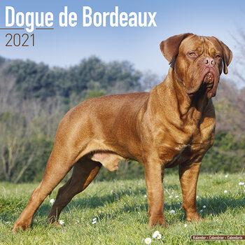Dogue de Bordeaux naptár 2021