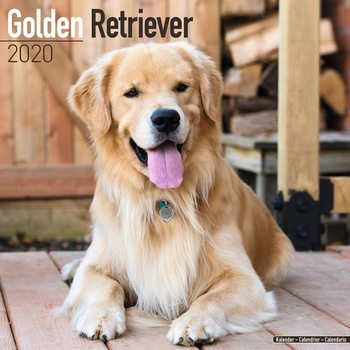 Golden Retriever naptár 2020