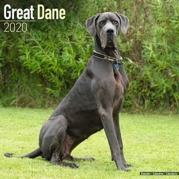 Great Dane naptár 2020