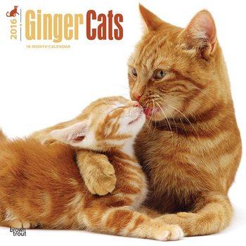 Macskák 2 naptár 2020