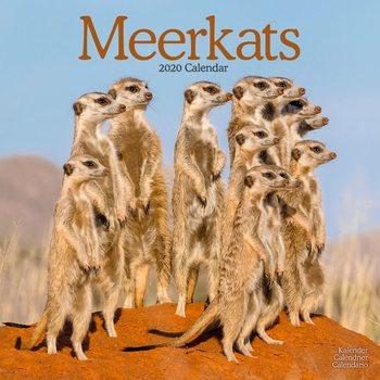 Meerkats naptár 2020