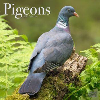 Pigeons naptár 2020