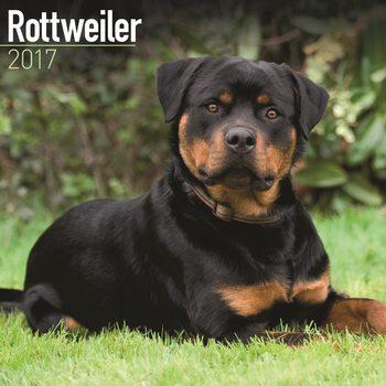 Rottweiler naptár 2017