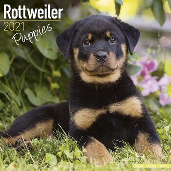 Rottweiler naptár 2021