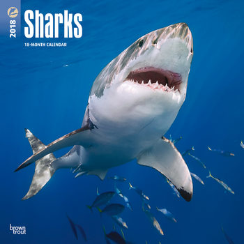 Sharks naptár 2018