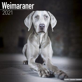 Weimaraner naptár 2021