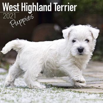 West Highland Terrier naptár 2021