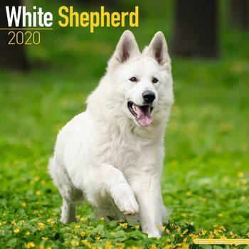 White Shepherd naptár 2020