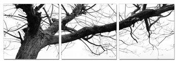 Gray treetop Obraz