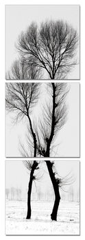 Modern design - black and white tree Obraz