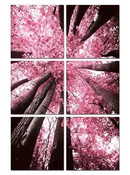 Pink treetop Obraz