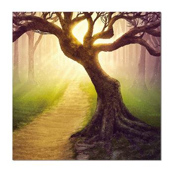 Tree in misty morning Obraz