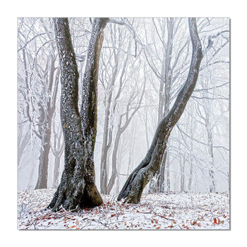 Trees Obraz