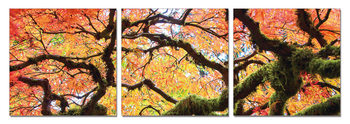 View of autumn tree's crown Obraz