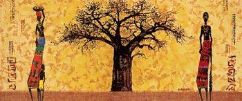 Baobab, Obrazová reprodukcia