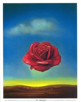 Reprodukce Meditující růže, 1958