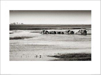 Reprodukce Philippe-Alexandre Chevallier - Chobe River Botswana