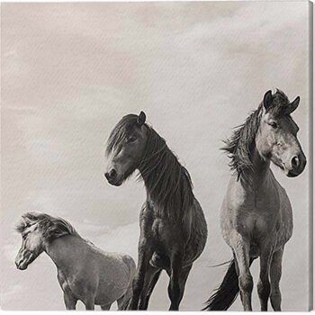 Obraz na plátně Carys Jones - The Three Amigos