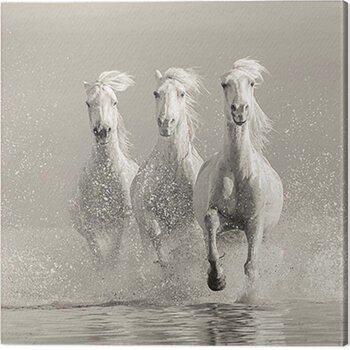 Obraz na plátně Carys Jones - Three White Horses