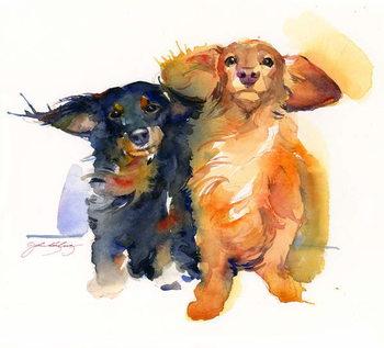 Obraz na plátně Dacshund Duo, 2014,