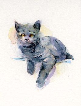 Obraz na plátně Grey kitten, 2017,