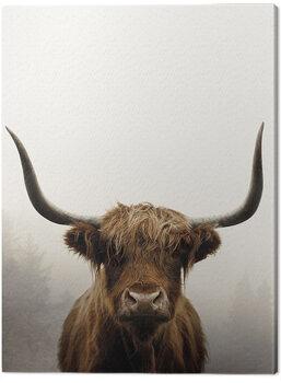 Obraz na plátně Ian Winstanley - Douglas