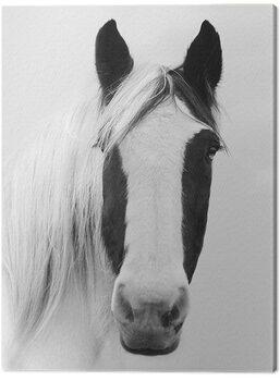 Obraz na plátně Ian Winstanley - Nordic Horse I