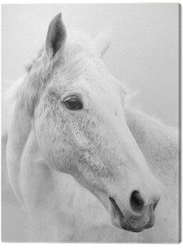 Obraz na plátně Ian Winstanley - Nordic Horse II