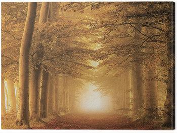 Obraz na plátně Lars Van De Goor - Autumn Feelings