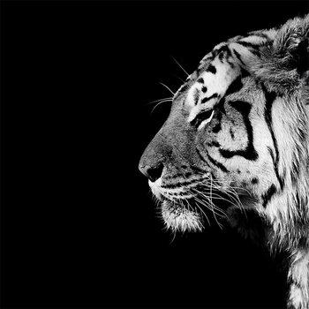 Obraz na plátně Nicolas Evariste - Panthera Tigris
