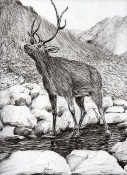 Obraz na plátně Stag, 2011,