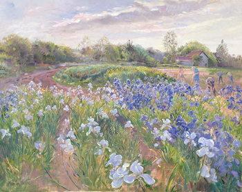 Obraz na plátně Sunsparkle on Irises, 1996