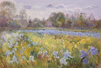 Obraz na plátně Iris Field in the Evening Light, 1993