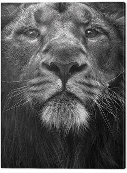 Obraz na plátně Marina Cano - The King