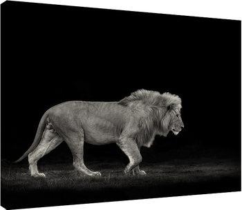 Obraz na plátně  Mario Moreno - Majestic